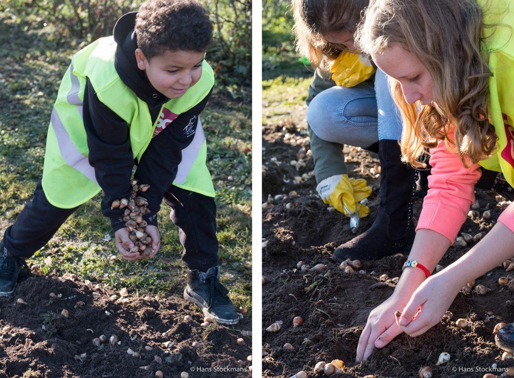 Leerlingen van basisschool De Berk in Paal tijdens het planten van bloembollen in De Weven.